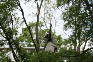 Take Care of Trees on Your Property Safely