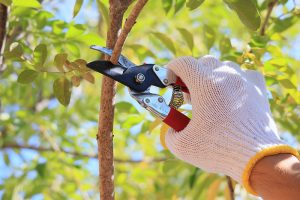 Taking Care Of Your Trees Is For The Professionals.